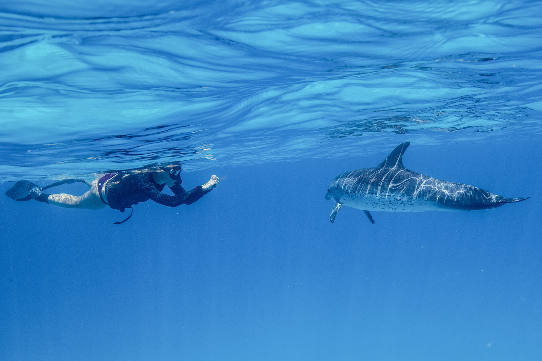 a young girl takes a picture of an Atlantic spotted dolphin underwater