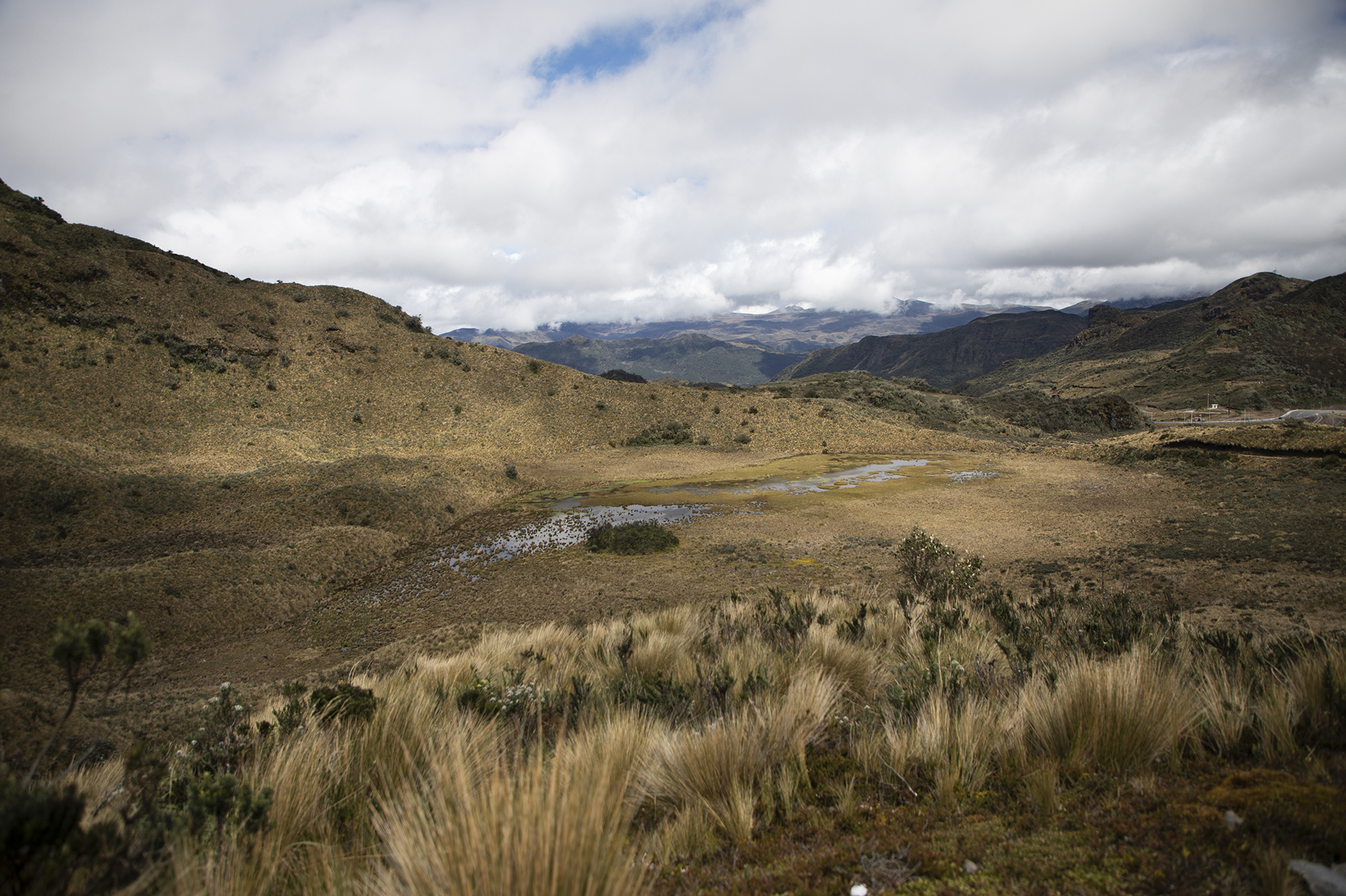 sprawling view of a wetland in the Cayambe Coca Ecological Reserve