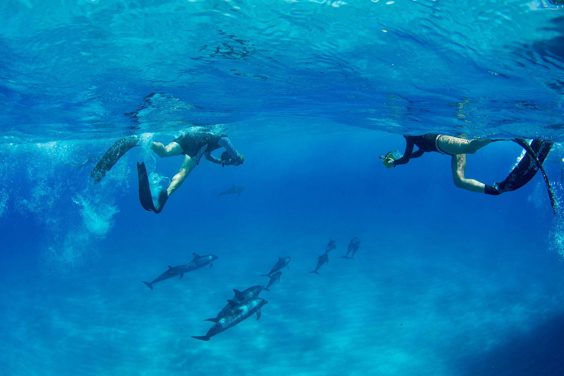 two researchers in scuba gear take pictures of a dolphin pod underwater