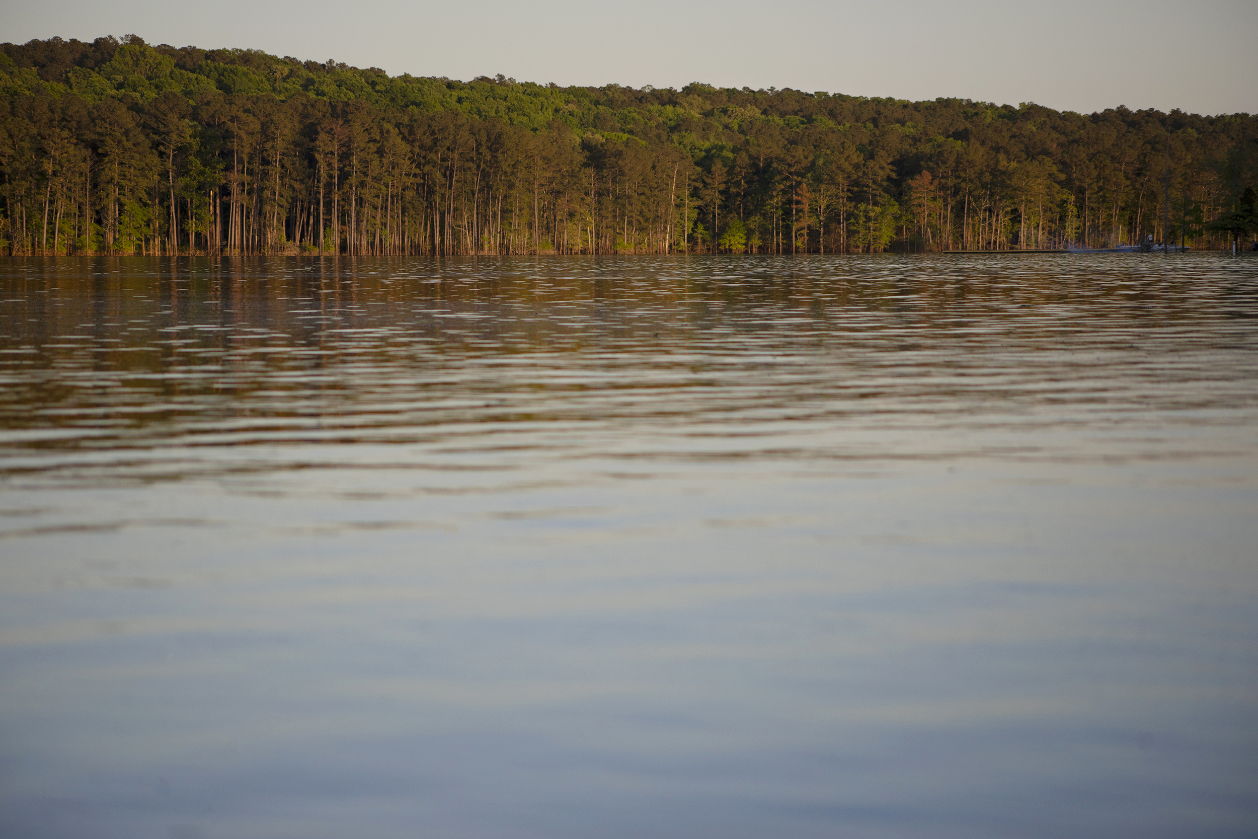 View across Jordan Lake, surrounded by forest.