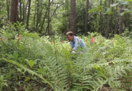Conserving-Rare-Plants-It-Takes-an-Army