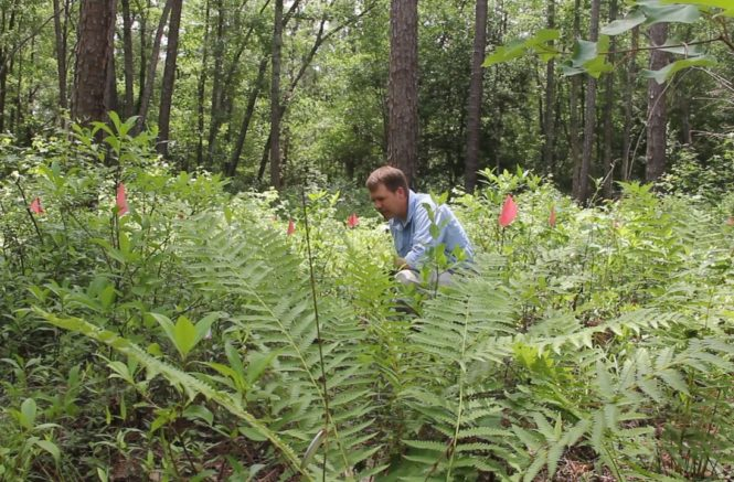 Conserving Rare Plants: It Takes an Army