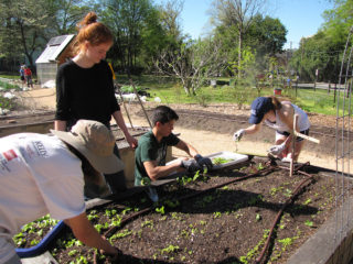a group of young men and women plant lettuce in a raised garden