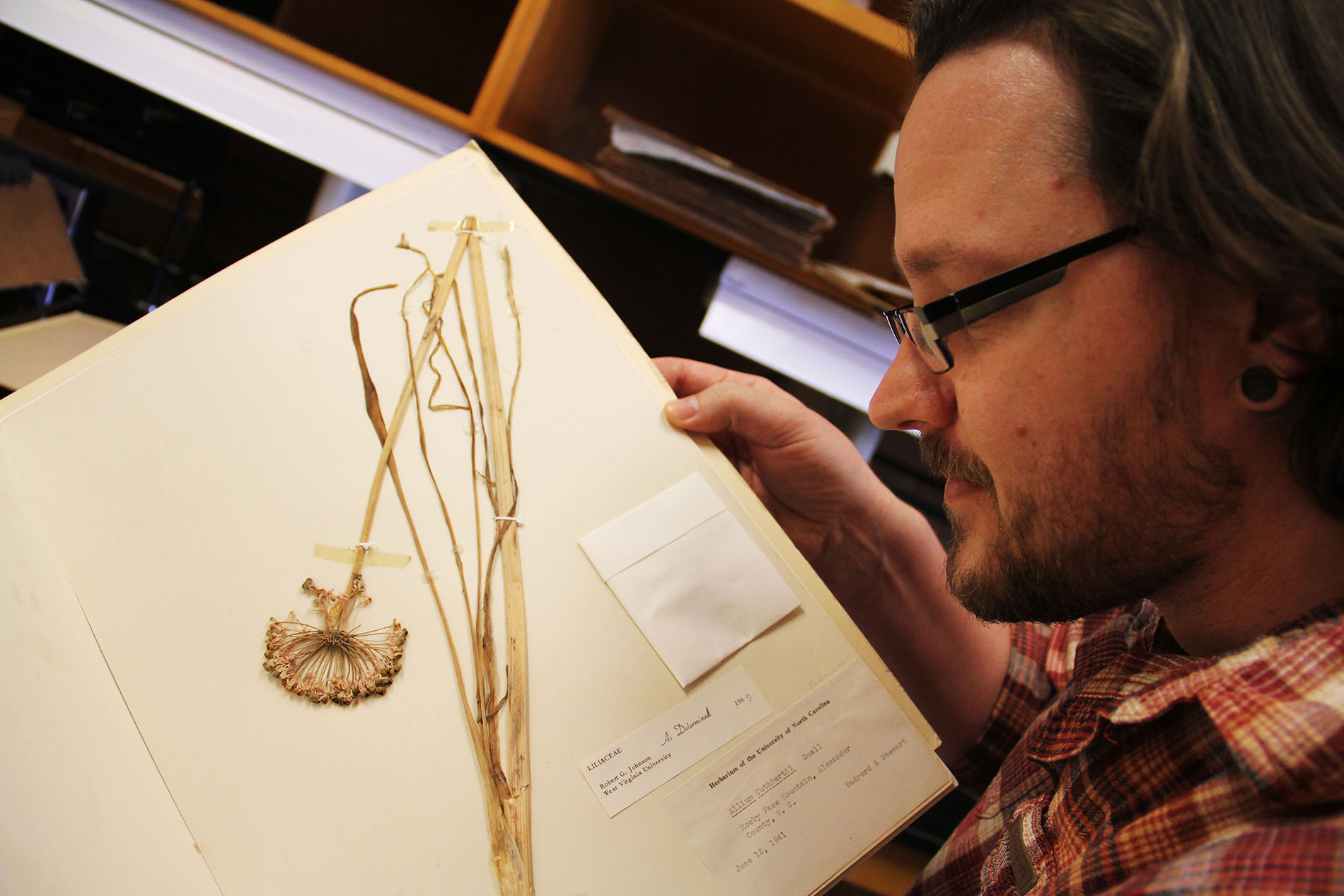 Derick Poindexter looks at a dried specimen of Keever's onion
