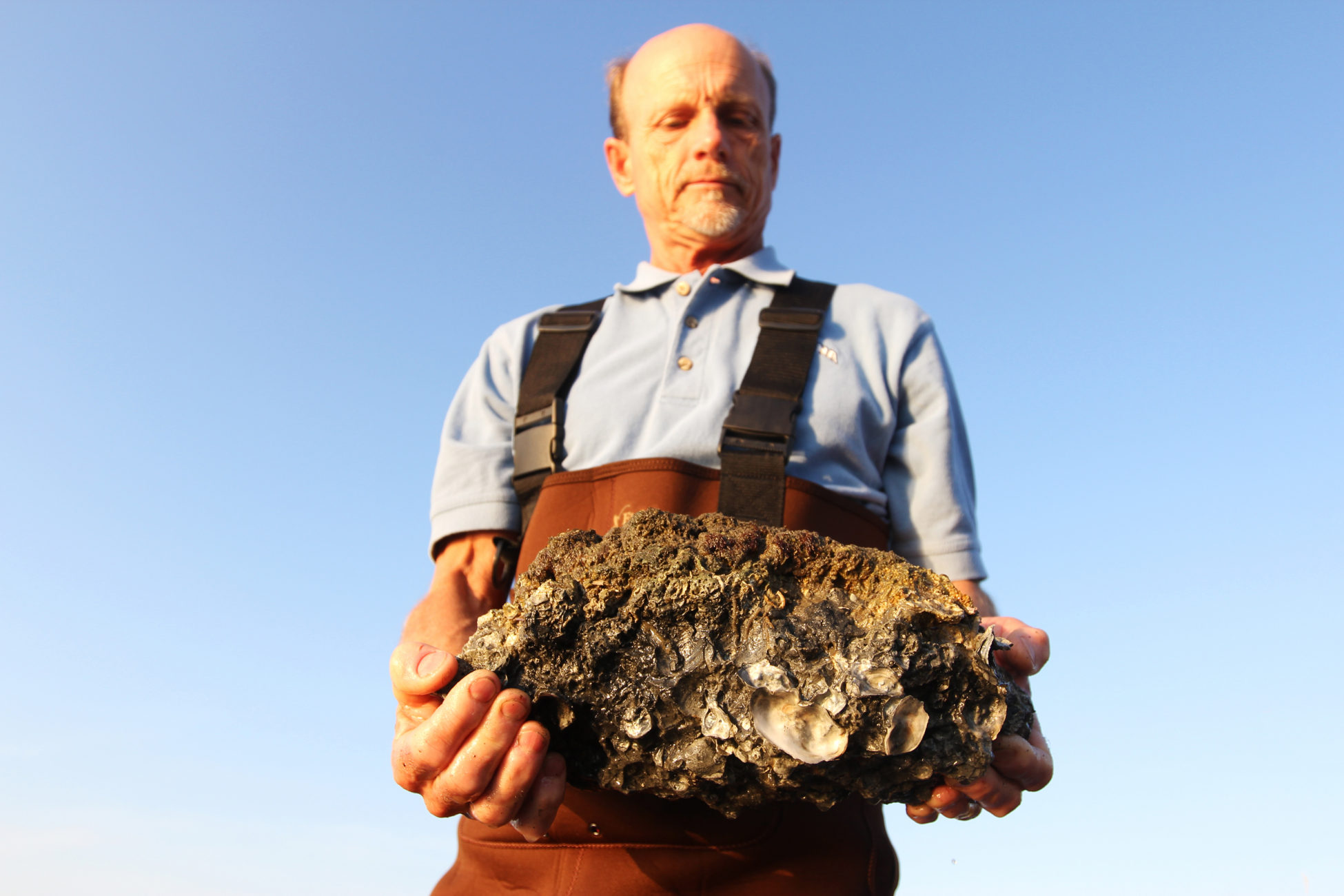 Lindquist holds up a block of his fast-growing oysters to the camera.
