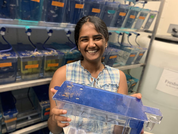 Vaishnavi Sirirpurapu holds a container of zebrafish in the Bagnat Lab
