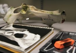 A moose hip bone sits on a a table next to a sketch pad and drawing tools