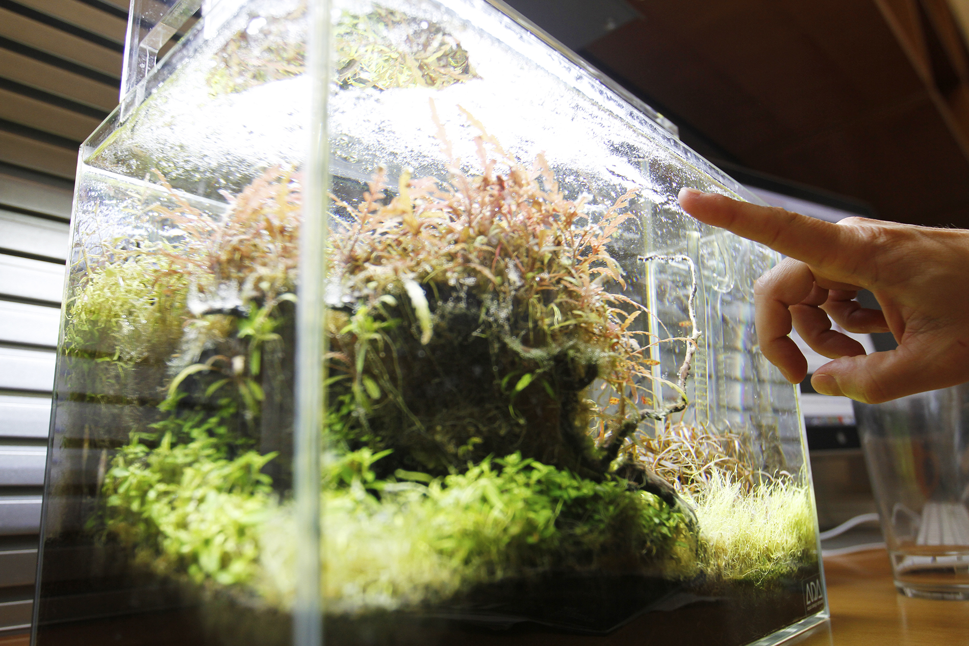 Dave Nicewicz points to the oxygen bubbles in his freshwater aquarium.