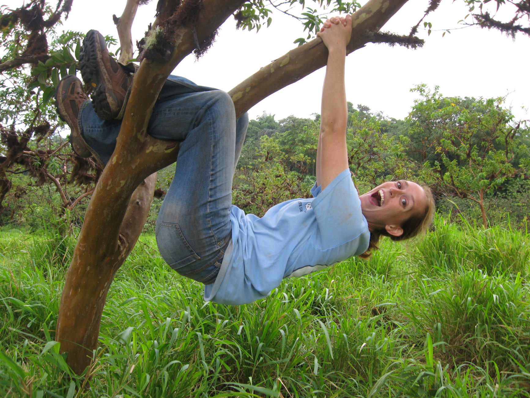 Photo courtesy of Madelyn PercyPercy does her best impression of a sloth in an invasive guayaba (guava) tree. Guayaba was introduced to the Galápagos and is harmful to the native species, but good for cow pastures, as it provides the cows shade. Madelyn is interested in understanding how the guayaba and other invasive species might affect soil structure or chemistry.