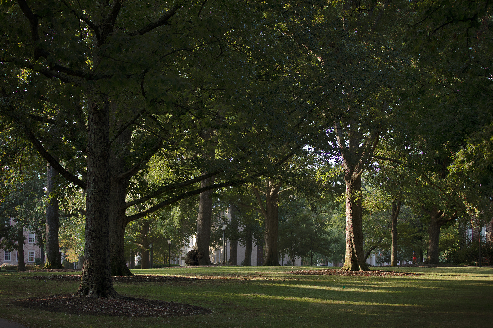 Trees scattered throughout McCorkle Place