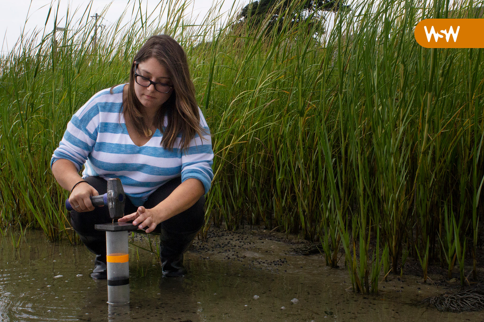 Image of Mollie Yacano wading in a marsh with a hammer in hand, setting up research equipment.