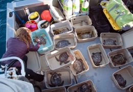 A man coils a rope while standing on a boat.