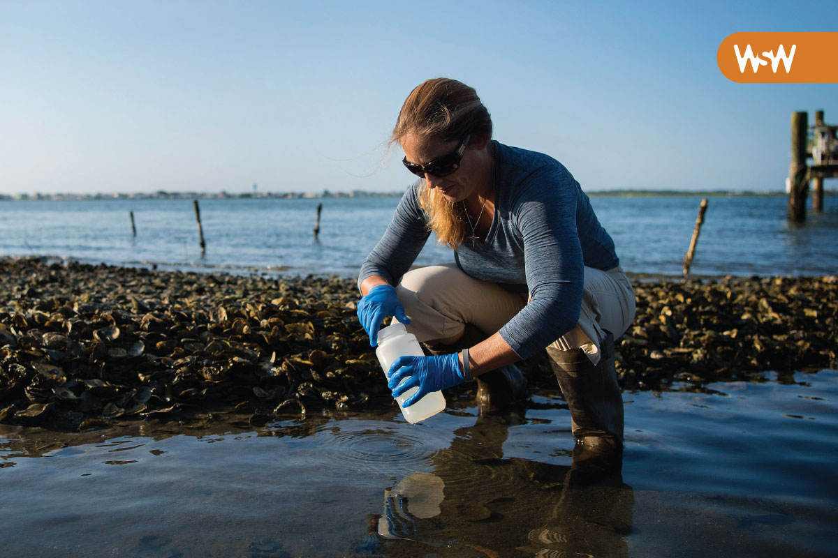 Rachel Noble collects water samples along the beach in Morehead City
