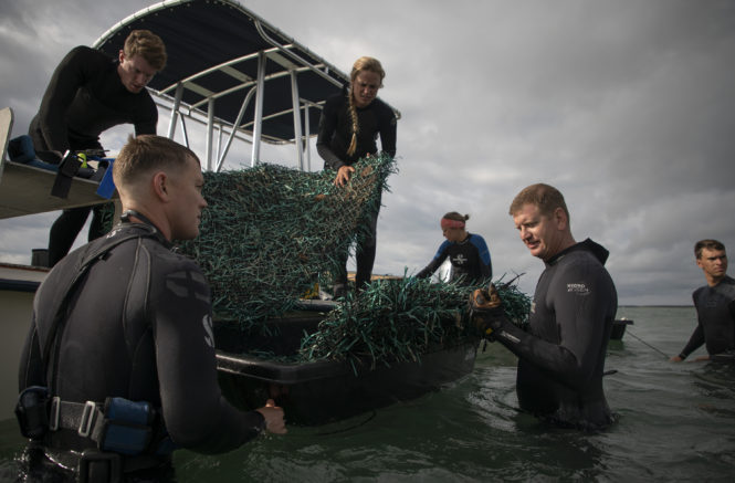 A Solution for Seagrass