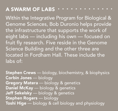 A Swarm of Labs Within the Integrative Program for Biological & Genome Sciences, Bob Duronio helps provide the infrastructure that supports the work of eight labs — including his own — focused on fruit fly research. Five reside in the Genome Science Building and the other three are located in Fordham Hall. These include the labs of: -Stephen Crews — biology, biochemistry, & biophysics -Corbin Jones — biology -Gregory Matera — biology & genetics -Daniel McKay — biology & genetics -Jeff Sekelsky — biology & genetics -Stephen Rogers — biology -Toshi Hige — biology & cell biology and physiology