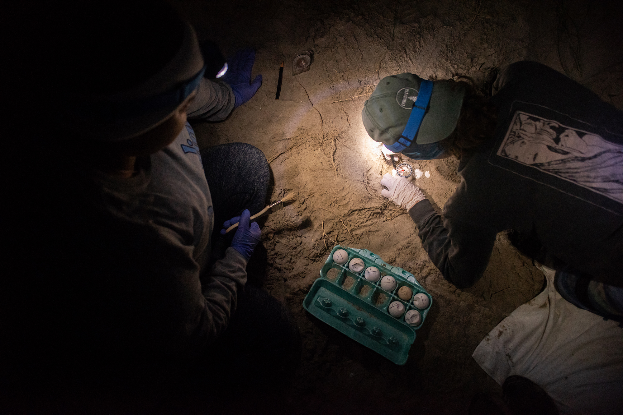 field assistants unearth eggs in the sand