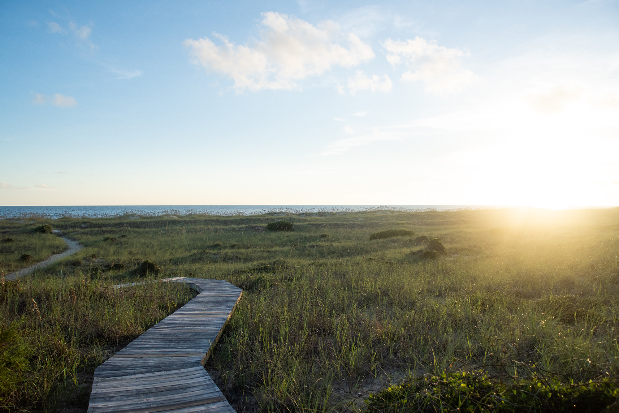 a wide shot of the beach and grasslands on Bald Head Island