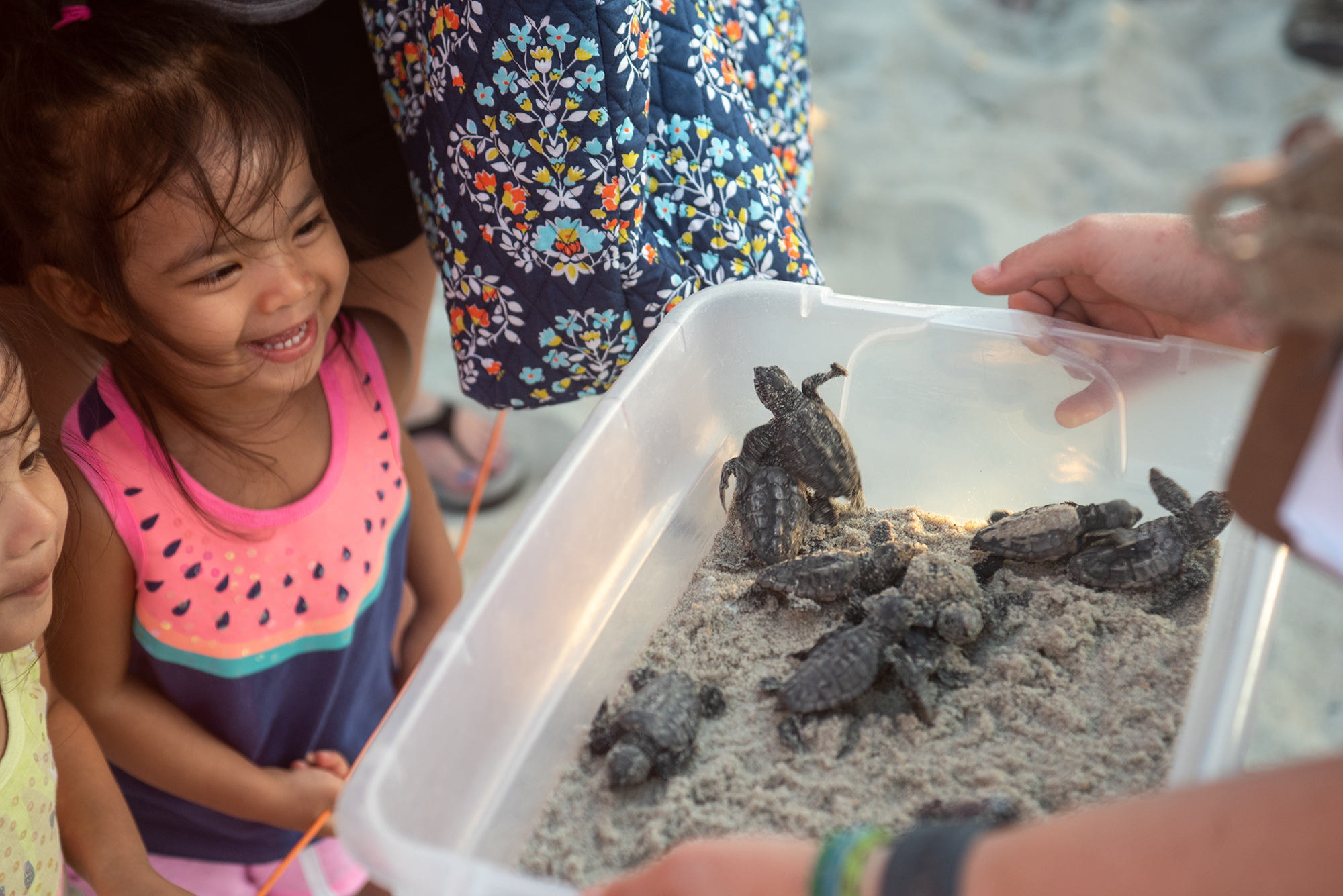 a conservancy staff member shows baby turtles to young kids watching the excavation