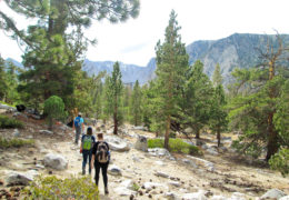 a group of female hikers hike in the Sierra Nevadas