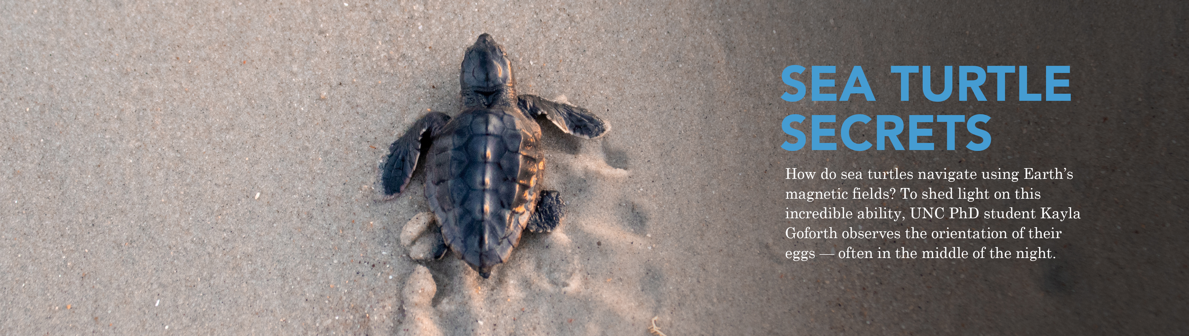 Sea Turtle Secrets: How do sea turtles navigate using Earth's magnetic fields? To shed light on this incredible ability, UNC PhD Student Kayla Goforth observes the orientation of their eggs — often in the middle of the night.