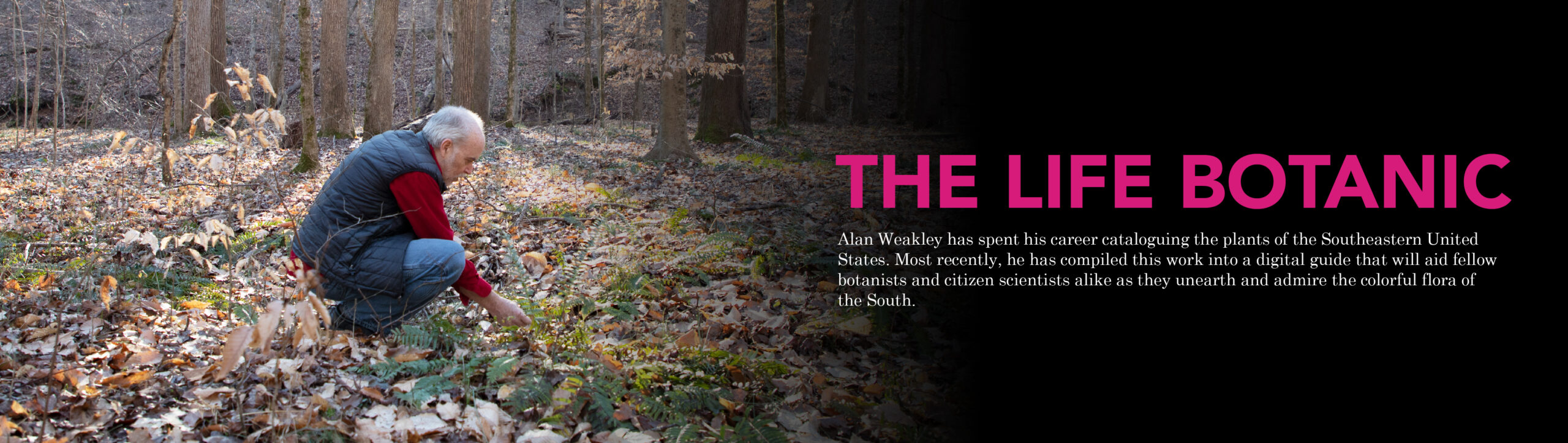 "Main feature banner for the story ""A Life Botanic"" with an image of Alan Weakley crouched down in a forest, looking at plants. The description for this story reads: ""Alan Weakley has spent his career cataloguing the plants of the Southeastern United States. Most recently, he has compiled this work into a digital guide that will aid fellow botanists and citizen scientists alike as they unearth and admire the colorful flora of the South."" Click here to read this story."