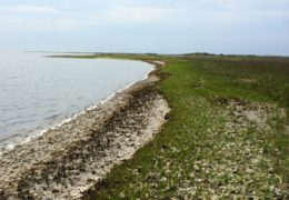 Photo by Emily Woodward Carrot Island, near Beaufort, North Carolina, is eroding about three feet a year, says UNC marine scientist Tony Rodriguez.