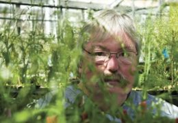 Photo of Jeff Dangl in the greenhouse.