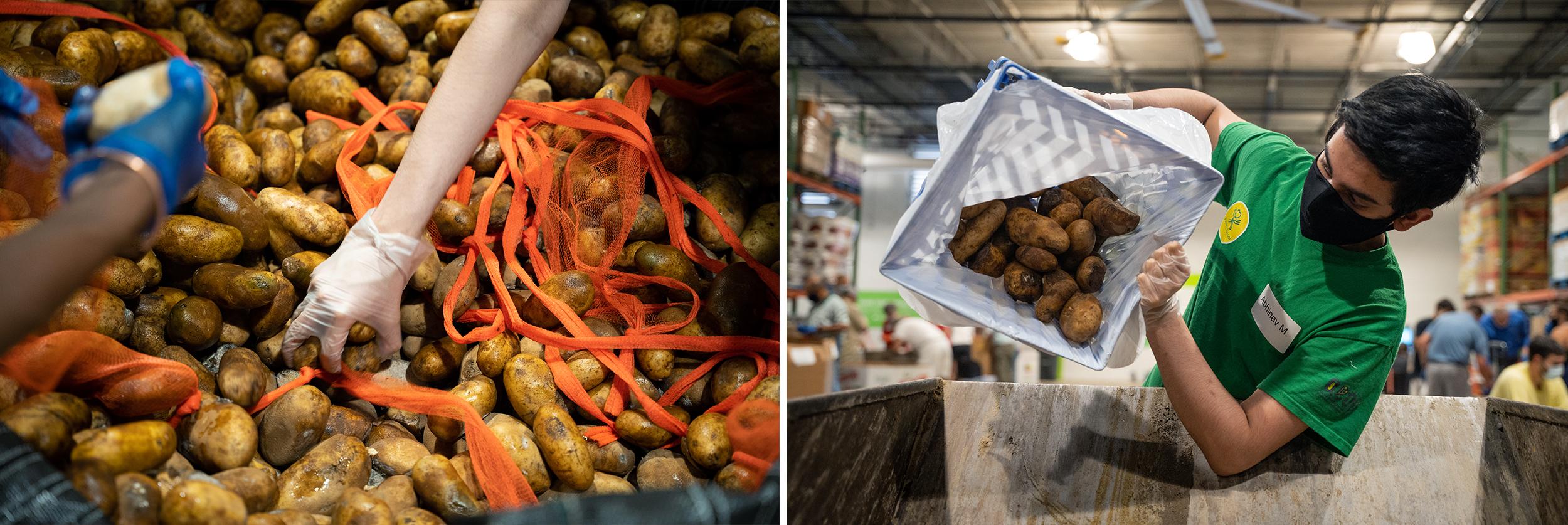 a tight shot of a hand grabbing a potato and Abhinav Meduri sorting potatoes