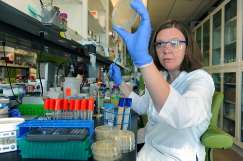 Photo of Elizabeth Shank in the lab, examining a petri dish.