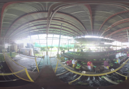 a panoramic image of banana plantation warehouse in Panema