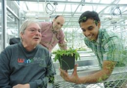 Photo courtesy of UNC News Services Jeff Dangl, a plant biologist; Vladmir Jojic, a computer scientist; and Surge Biswas, a statistics major, collaborate on plant genomics research.