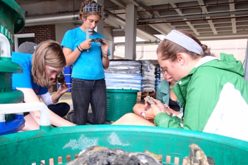 Photo of four undergraduate students examining oysters.