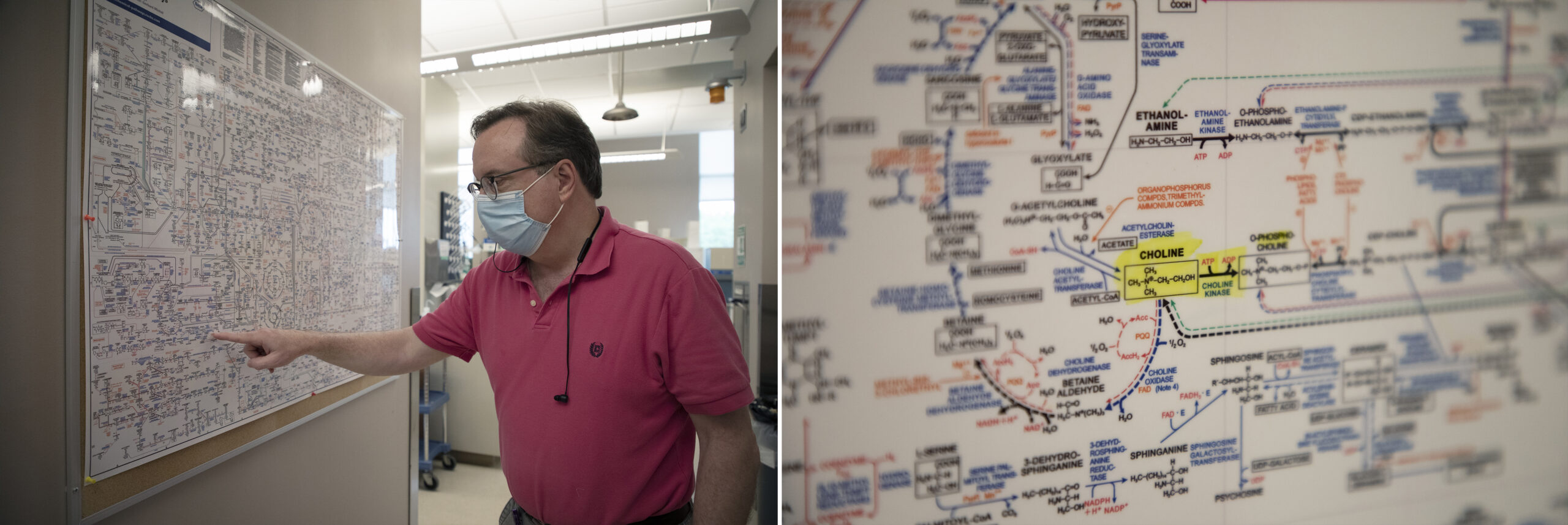 """Walter Friday points to """"choline"""" on a metabolic pathways poster; a close-up of choline on the poster"""
