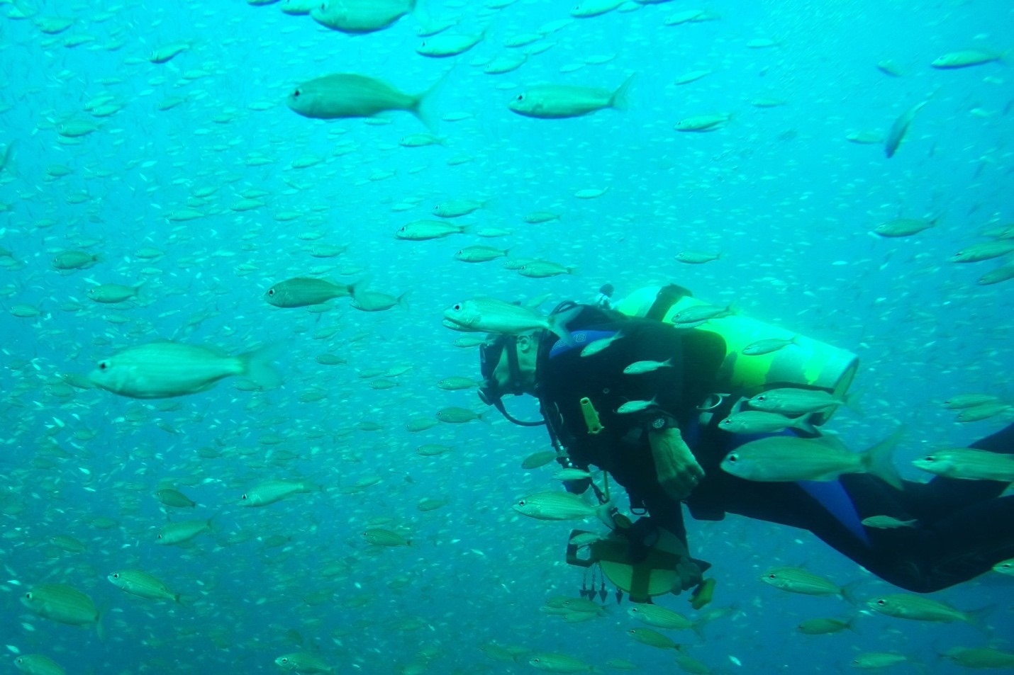 scuba diver swims through school of fish underwater