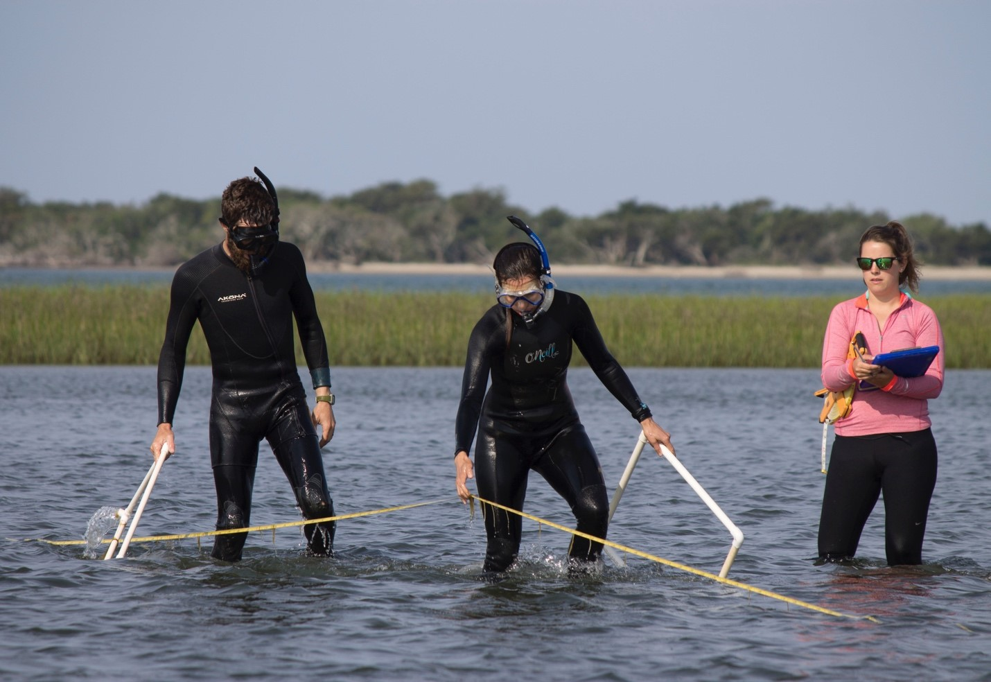 two women and one man stand knee-deep in the a reserve, measuring sea grass