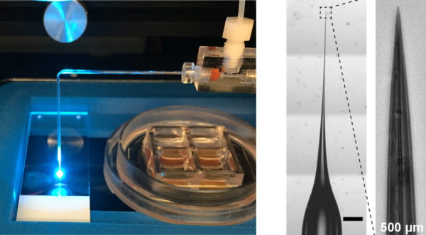 This device uses a needle similar to that in a sewing machine to inject bacteria into mini-guts.