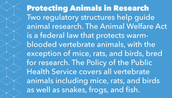Protecting Animals in Research Two regulatory structures help guide animal research. The Animal Welfare Act is a federal law that protects warm-blooded vertebrate animals, with the exception of mice, rats, and birds, bred for research. The Policy of the Public Health Service covers all vertebrate animals including mice, rats, and birds as well as snakes, frogs, and fish.