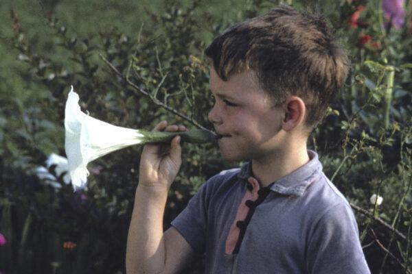Alan Weakley when he was a child, blowing on an angel's trumpet flower